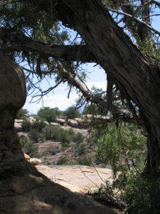 Hovenweep landscape