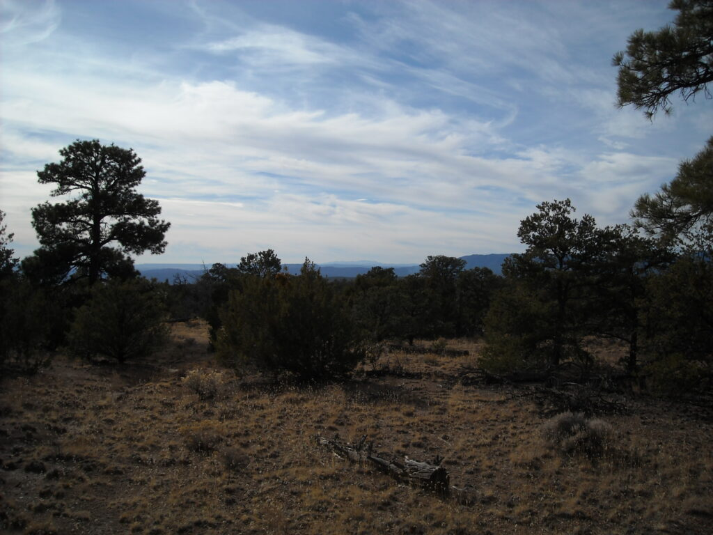 November day in Santa Fe National Forest